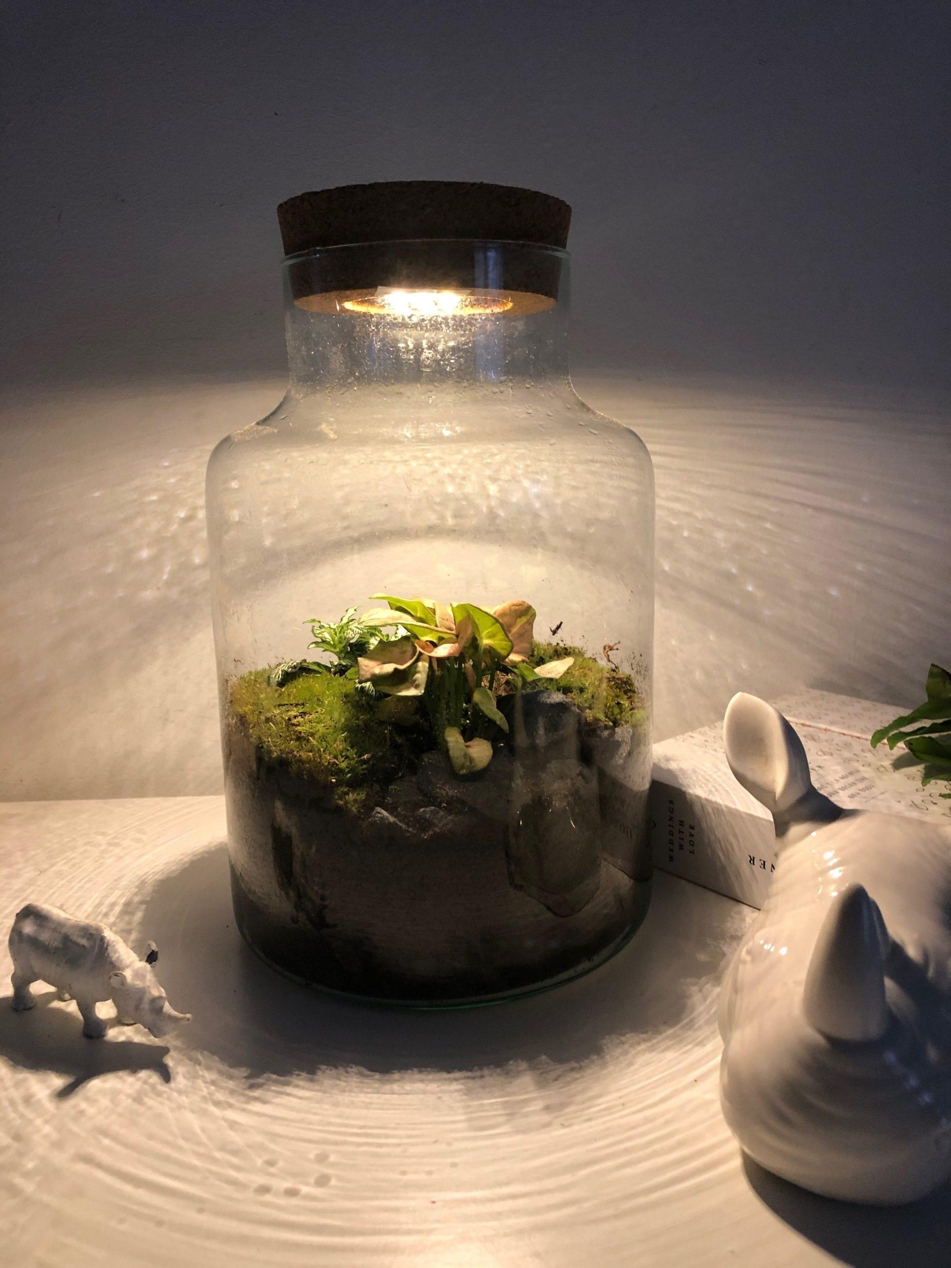 Venta onlin microclima plantas decoración y diseño
